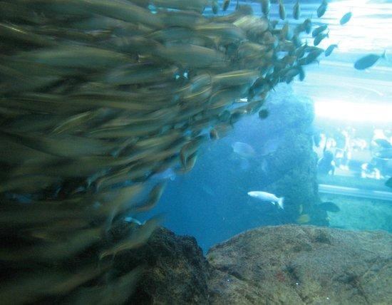 Picture of Enoshima Aquarium, Fujisawa - TripAdvisor