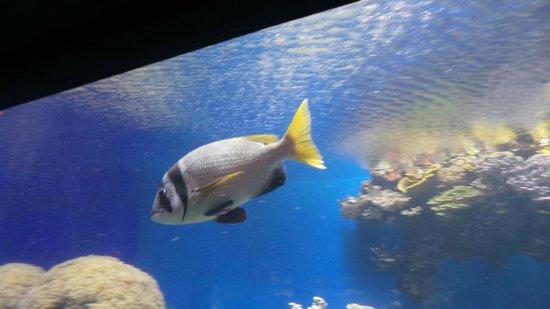Underwater Observatory Marine Park : Under