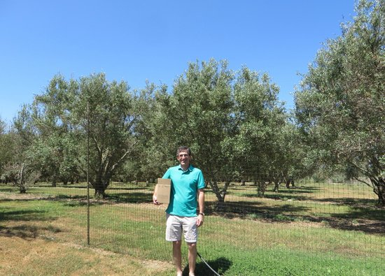 Bella Vista Ranch: olive trees
