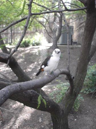 San Antonio Zoo: Allo toi ! Hi ! you ! - 02/05/2014
