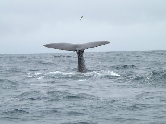 Kaikoura Boutique Hotel: Mighty sperm whale