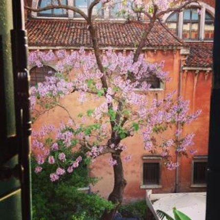 Hotel Abbazia : View from my window