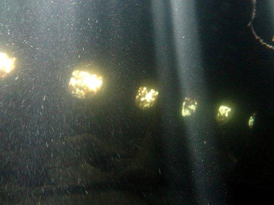 SeaPro Water Sports: Inside the sunken sub