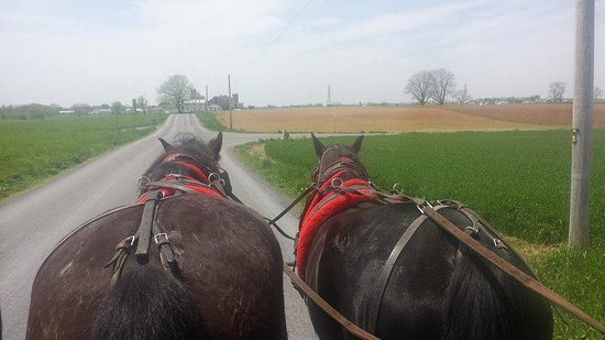 Aaron & Jessica's Buggy Rides : Beautiful ride