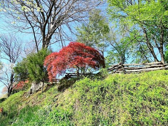 Colvin Run Mill Park: walking along the driveway