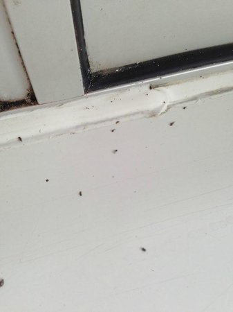 Grand Hotel Scarborough: Flys on window sills in resturant
