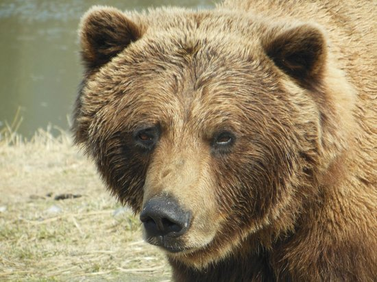 Alaska Wildlife Conservation Center: I see you
