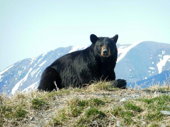Alaska Wildlife Conservation Center: Just awoken from a long winter's nap