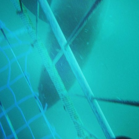 Apex Shark Expeditions : Apex cage dive