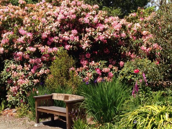 Mendocino Coast Botanical Gardens: Enchanting plants and lush landscapes