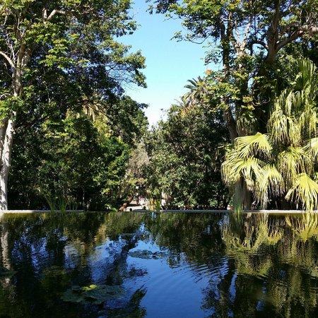 Jardín Botánico: pond view