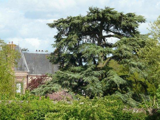 Le Clos- Relais et Châteaux : Le cèdre du parc du Clos, vu de l'abbaye.