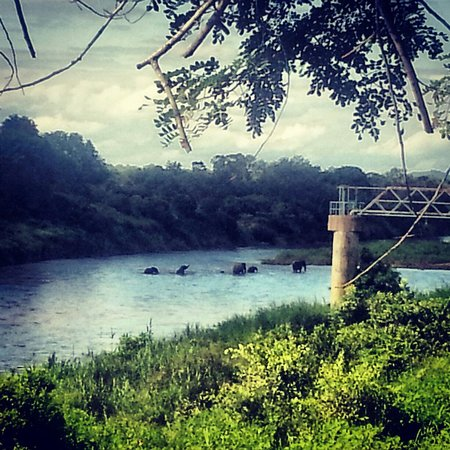 Khandizwe River Lodge: View of elephants crossing from the deck.