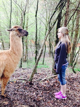 Smoky Mountain Llama Treks - Day Tours: The best staring contest of my life.