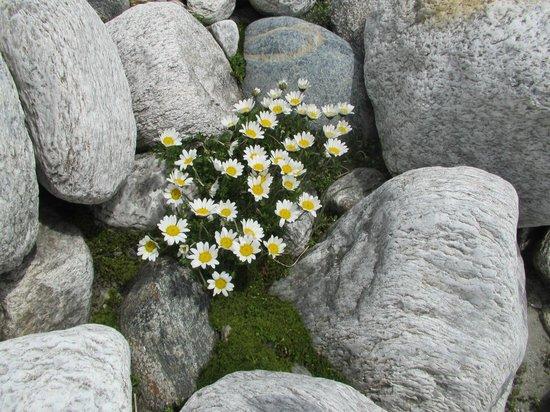 Berghotel Rudolfshütte: Margaritten
