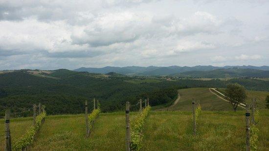 Borgo Carpineto: Veduta