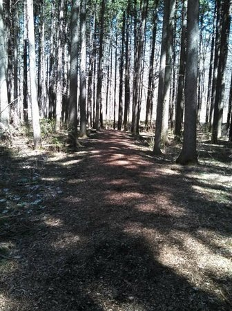 Morton Arboretum : East Side Path