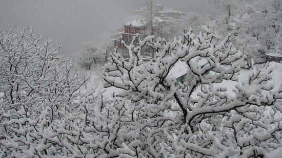 The Grand Shamba-La : The tree just below