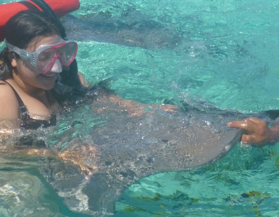 Keishi Tours: Feeding sting rays in the lagoon
