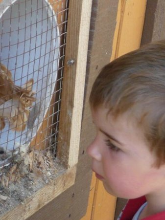 Two Eagles Lodge: A moment with the chickens...