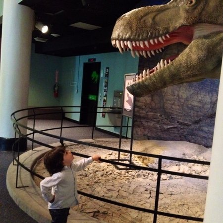 Academy of Natural Sciences of Drexel University: Dino confrontation!