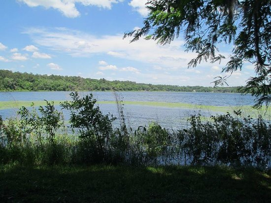 Alfred B. Maclay Gardens State Park : Picture taken at the seating area by the lake while walking through the gardens.