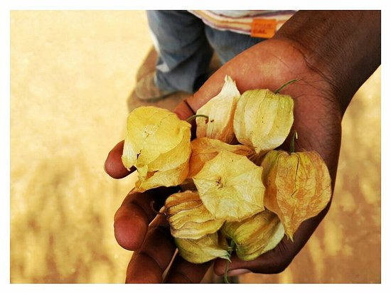 Kabale Backpackers: Local Fruit