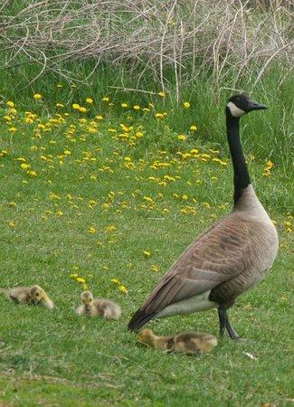 Lake Aquitaine Park: Plenty of wildlife around the large pond