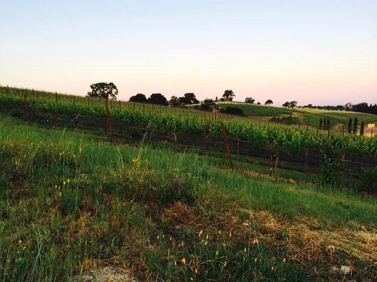 Vino Bello Resort: Vineyard trail on property