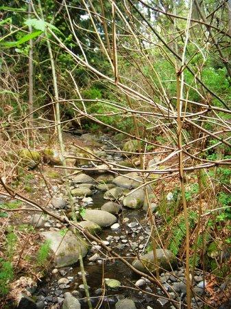 Mercer Slough Nature Park: small waterfall near Bellefields trailhead