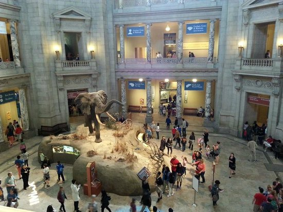 National Museum of Natural History: just incredible