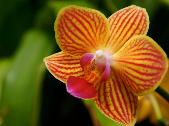 Minnesota Landscape Arboretum: in the greenhouse you'll find beautiful flowers
