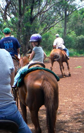 Happy Trails Hawaii: Helmets provided for the little ones.