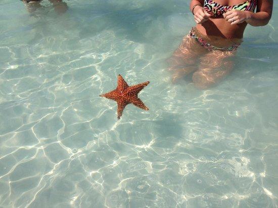 Charela Inn / Le Vendome: Nice company in nice water!!