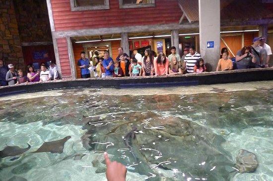Georgia Aquarium : touch pool