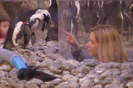 Georgia Aquarium : penguin