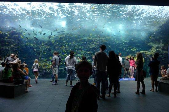 Georgia Aquarium : tropical reef