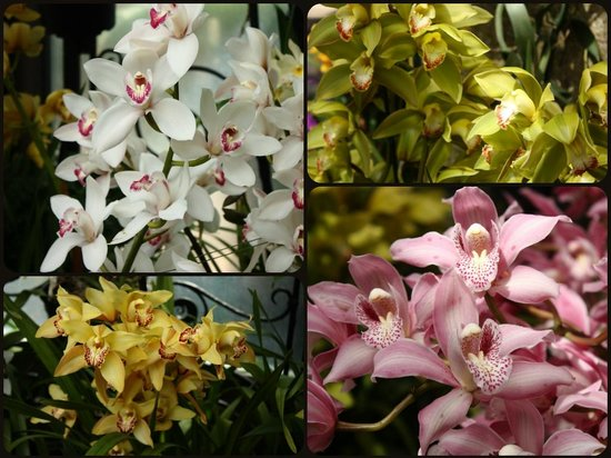 Longwood Gardens : Orchids