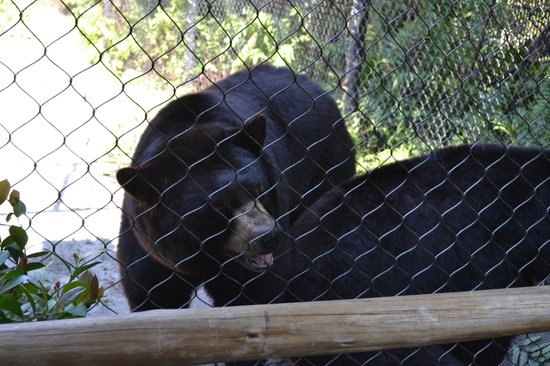 Palm Beach Zoo & Conservation Society : Bears