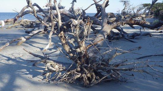 Hampton Inn & Suites Jekyll Island: Driftwood Beach