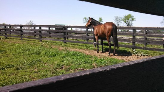 Old Friends at Dream Chase Farm: an old friend