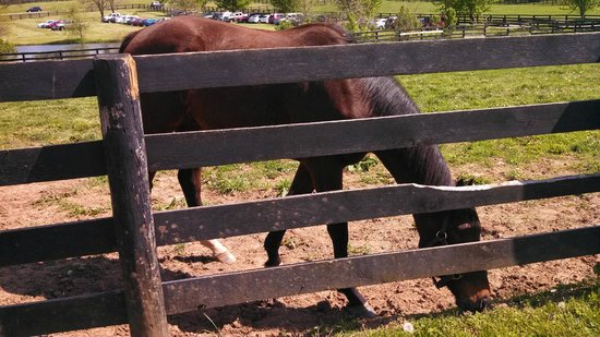Old Friends at Dream Chase Farm: happy horse