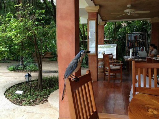 Hotel Capitan Suizo: There were a couple of visitors at the bar
