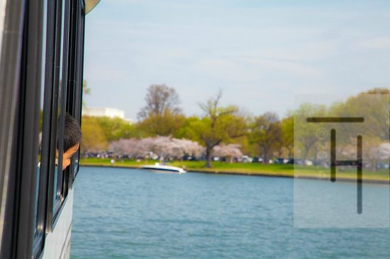 Potomac Riverboat Company : Arriving at the National Mall via watertaxi! Cherry blossoms greeting this excited young visitor