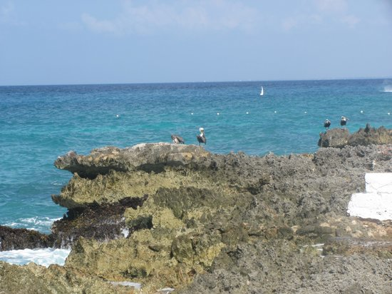 Viva Wyndham Dominicus Beach: Vista La Roca