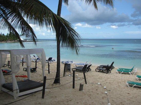 Viva Wyndham Dominicus Beach : Vista del Buffet