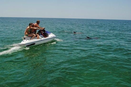 Panama city beach fishing charters dolphin shell island for Charter fishing panama city beach