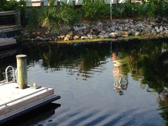 Disney's Old Key West Resort: Boat dock area