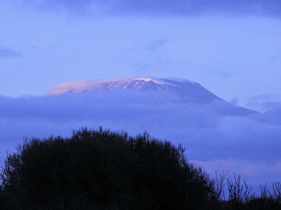 Amboseli National Park : Kilimanjaro in the early morning light