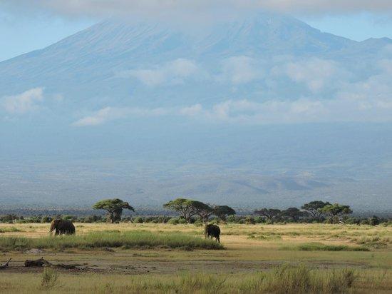 Amboseli National Park : Tuskers in shadow of Kilimanjaro